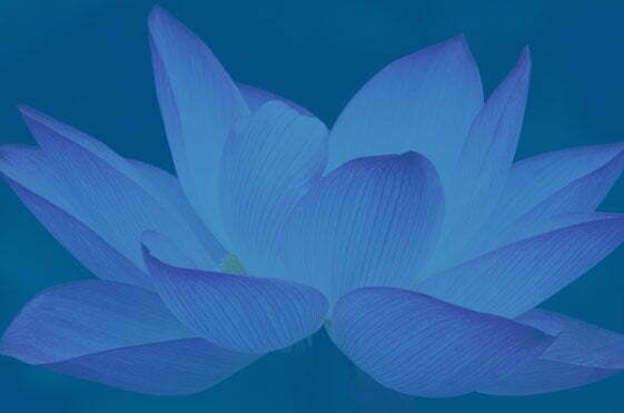"""Lotus Technology Service: Why """"Lotus Flower""""?"""